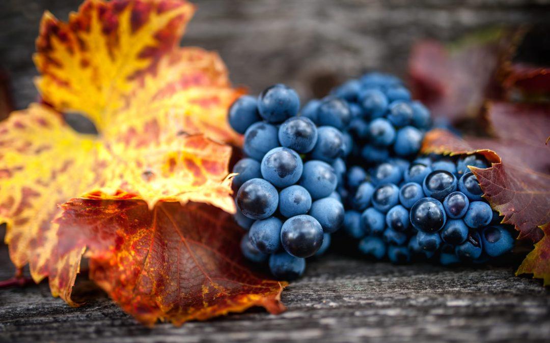 Rencontre d'automne avec le domaine Voge